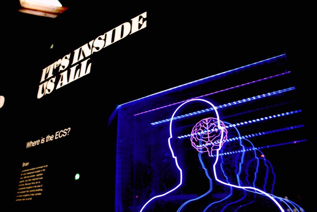 脳科学=ビジネスセンス?