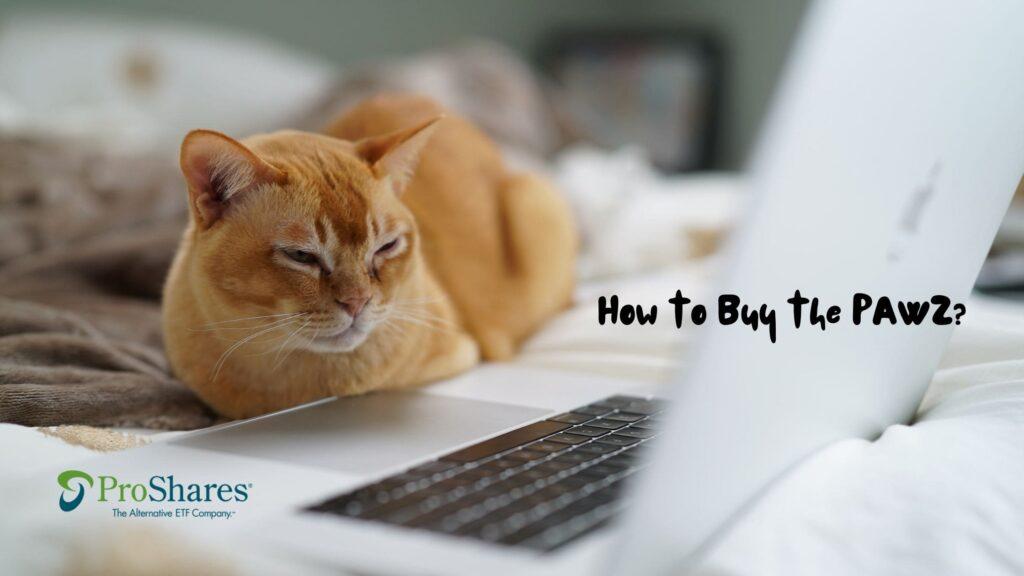 PAWZの買い方とは?