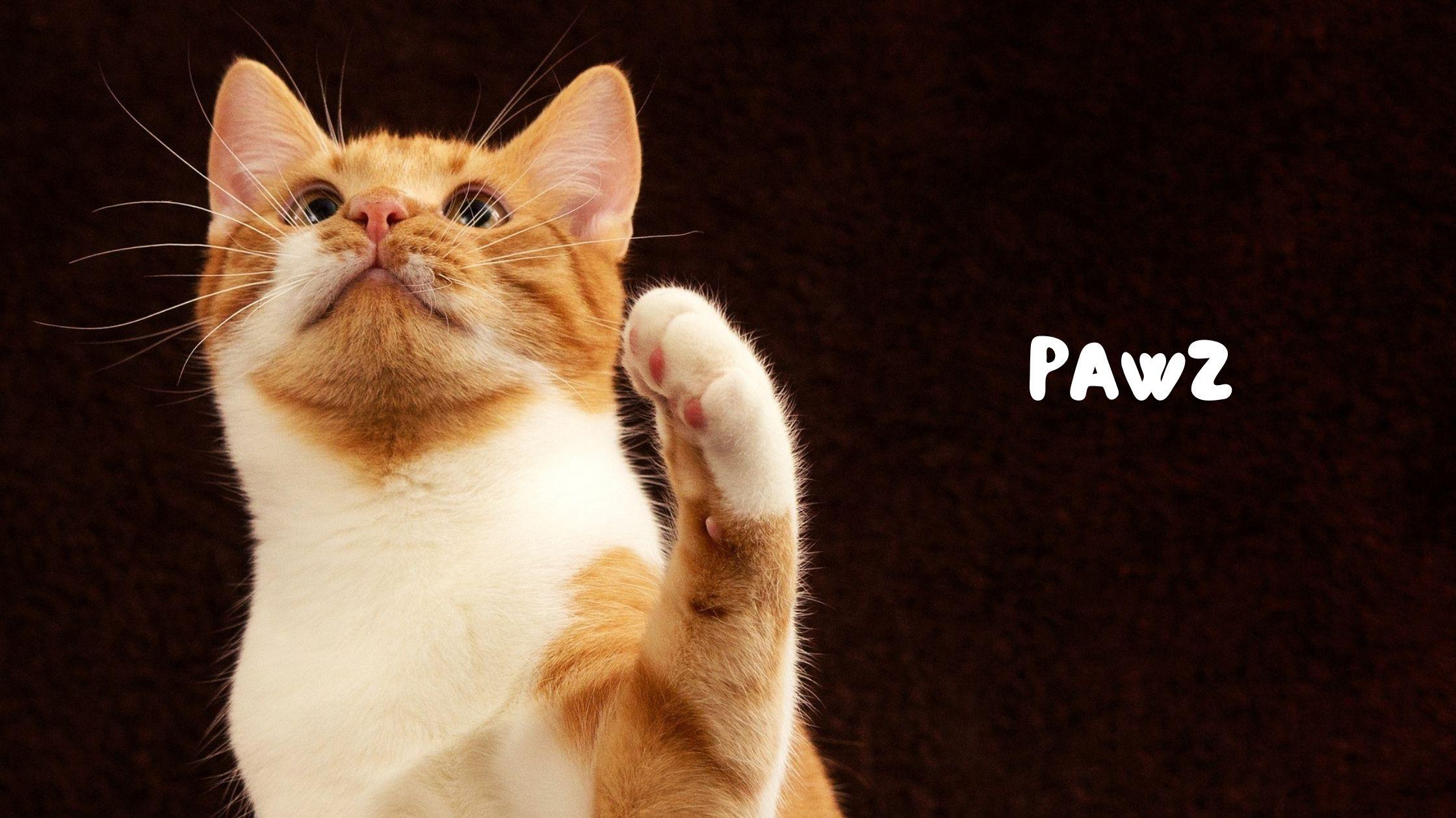 【ペット好き投資家必見!】PAWZってどんなETFなの?